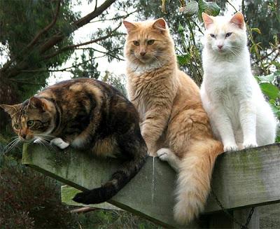 trio-gatti