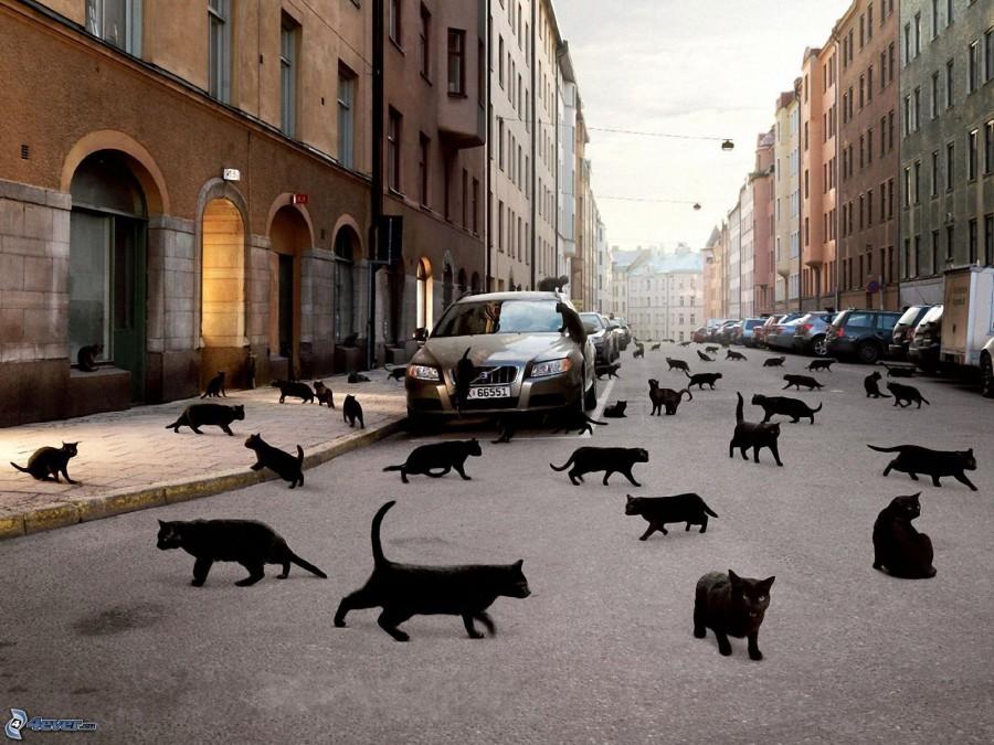 gatti-neri,-strada-152623