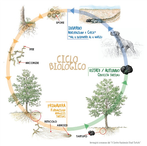 ciclo_biologico-2