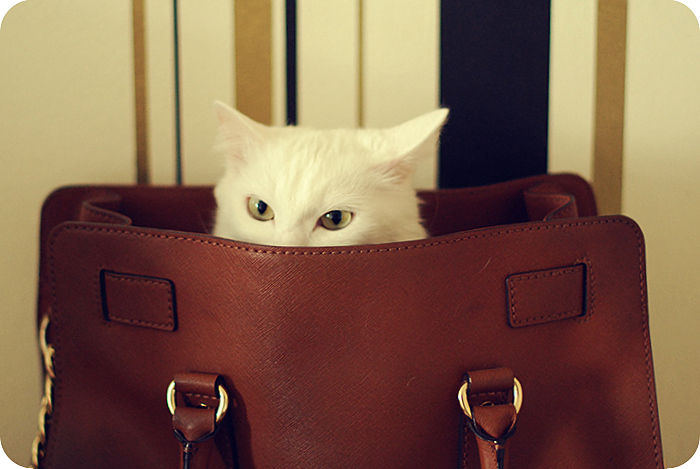 Рита в сумке