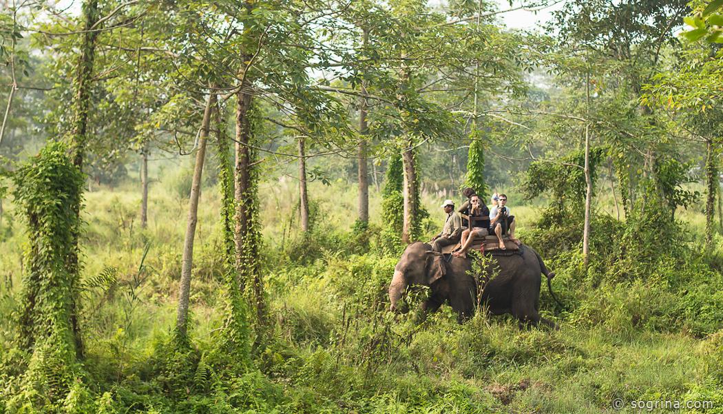 18 Safari by Sogrina