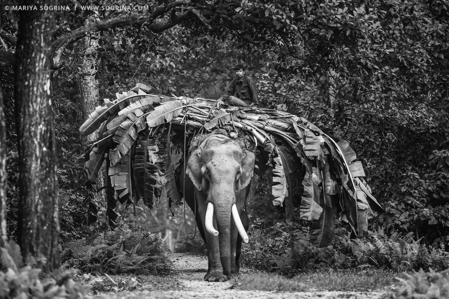 Wildlife-bw-by-Mariya-Sogrina-03
