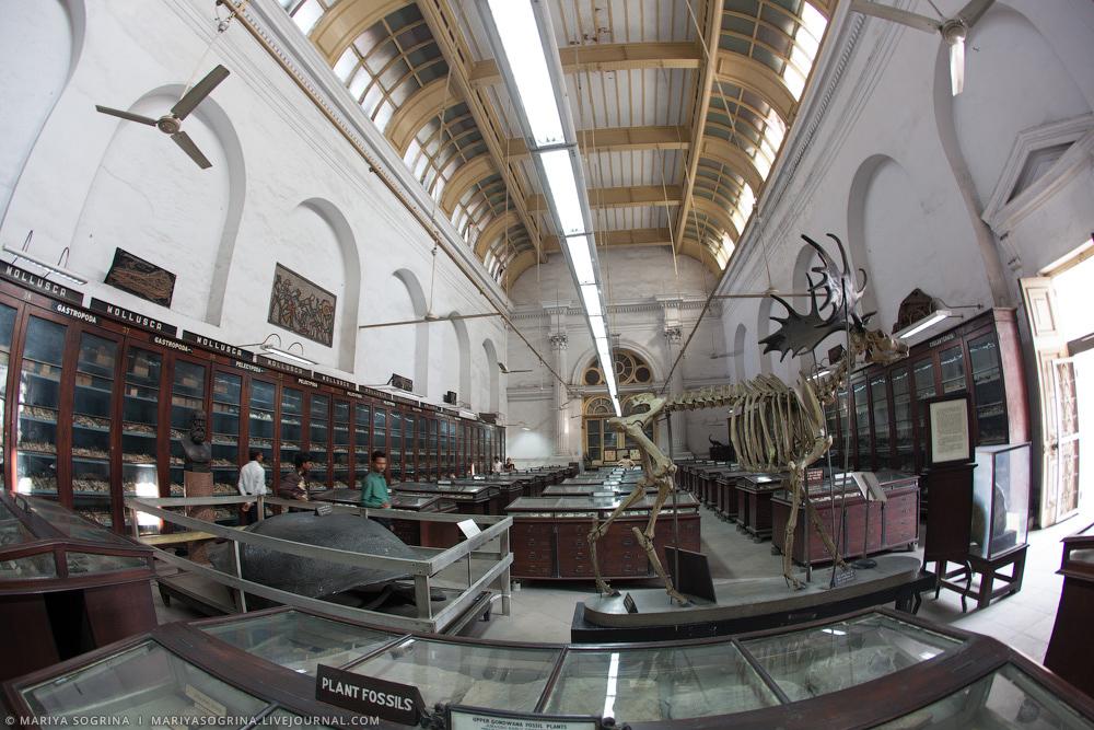 Mariya Sogrina Kolkata Museum-5