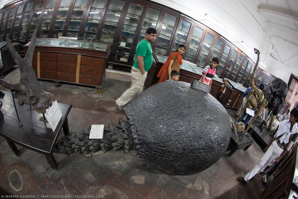Mariya Sogrina Kolkata Museum-12