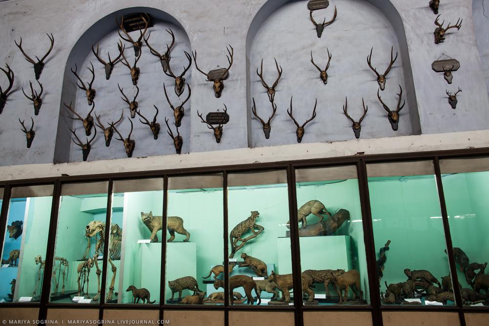 Mariya Sogrina Kolkata Museum-19