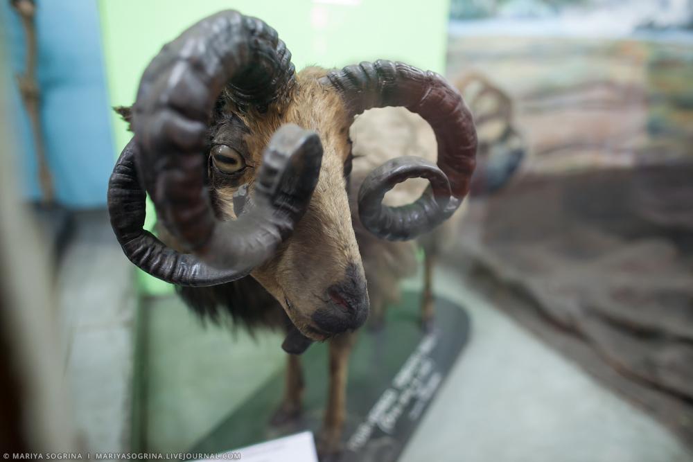 Mariya Sogrina Kolkata Museum-23