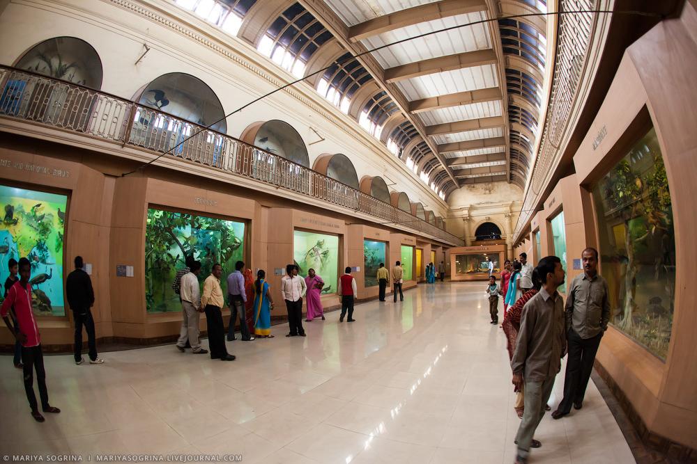 Mariya Sogrina Kolkata Museum-24