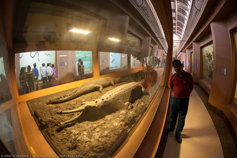 Mariya Sogrina Kolkata Museum-25