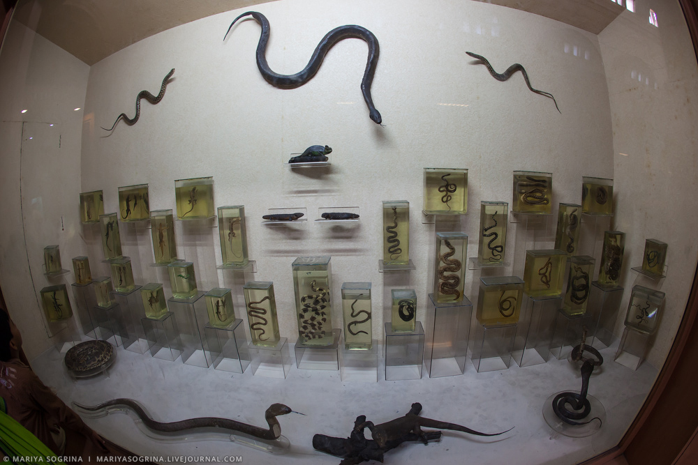 Mariya Sogrina Kolkata Museum-30