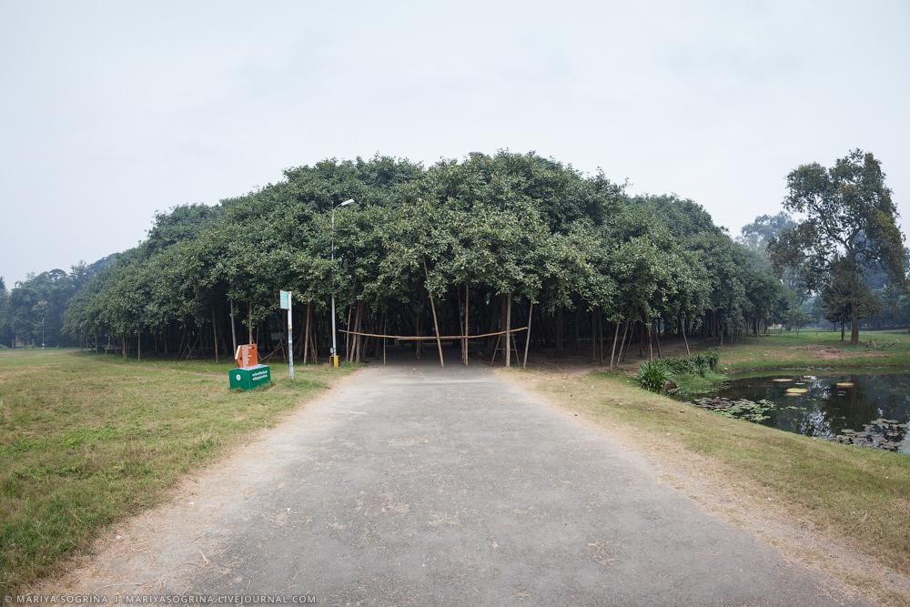 Mariya Sogrina Kolkata Great Banyan-2