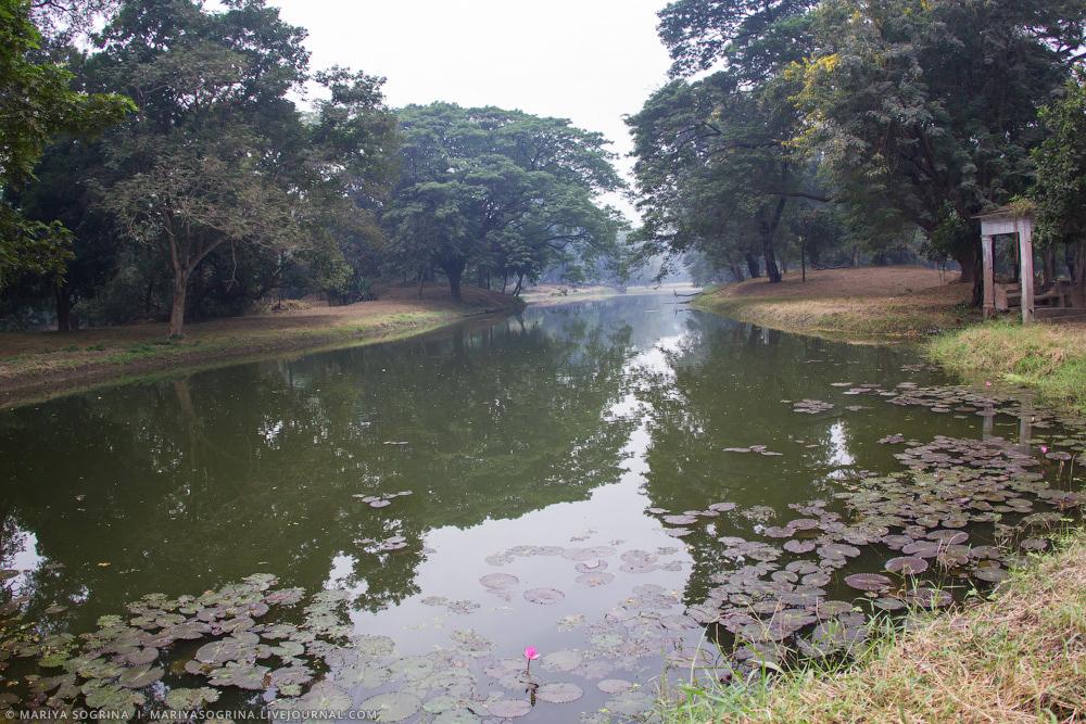 Mariya Sogrina Kolkata Great Banyan-13