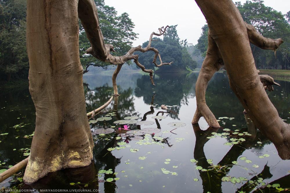 Mariya Sogrina Kolkata Great Banyan-17