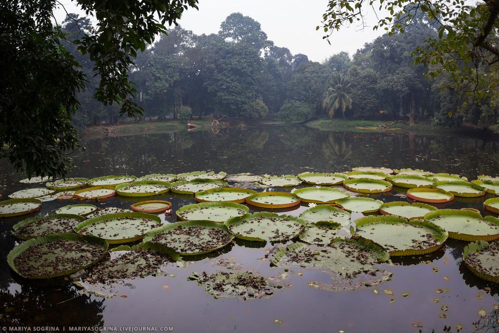 Mariya Sogrina Kolkata Great Banyan-21