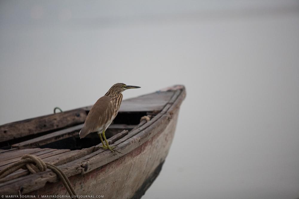 Varanasi by Mariya Sogrina-19
