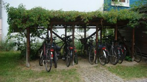 vine covered bikes