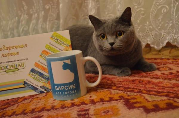 Барнаульцы требуют изобразить на новых купюрах кота Барсика.