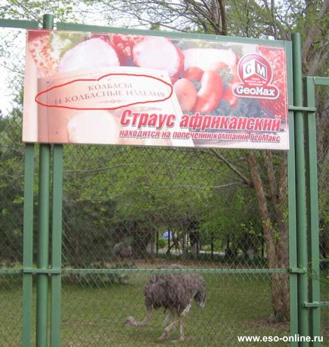страус ржака социалка колбасы попечение зоопарк