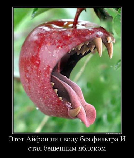 5667699_etot-ajfon-pil-vodu-bez-filtra-i-stal-beshennyim-yablokom