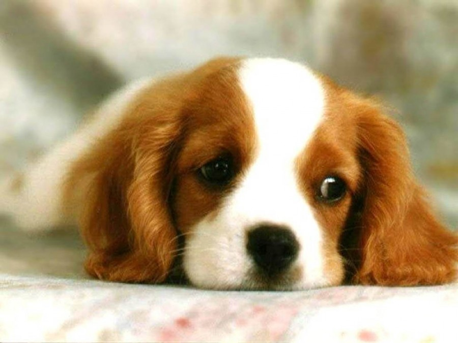 cute dog милый пес щенок