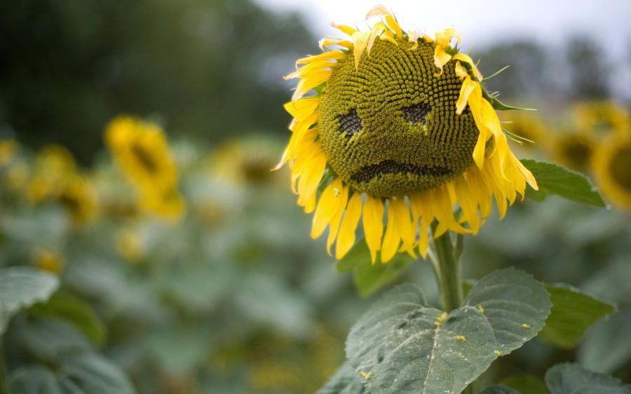 несчастный цветок