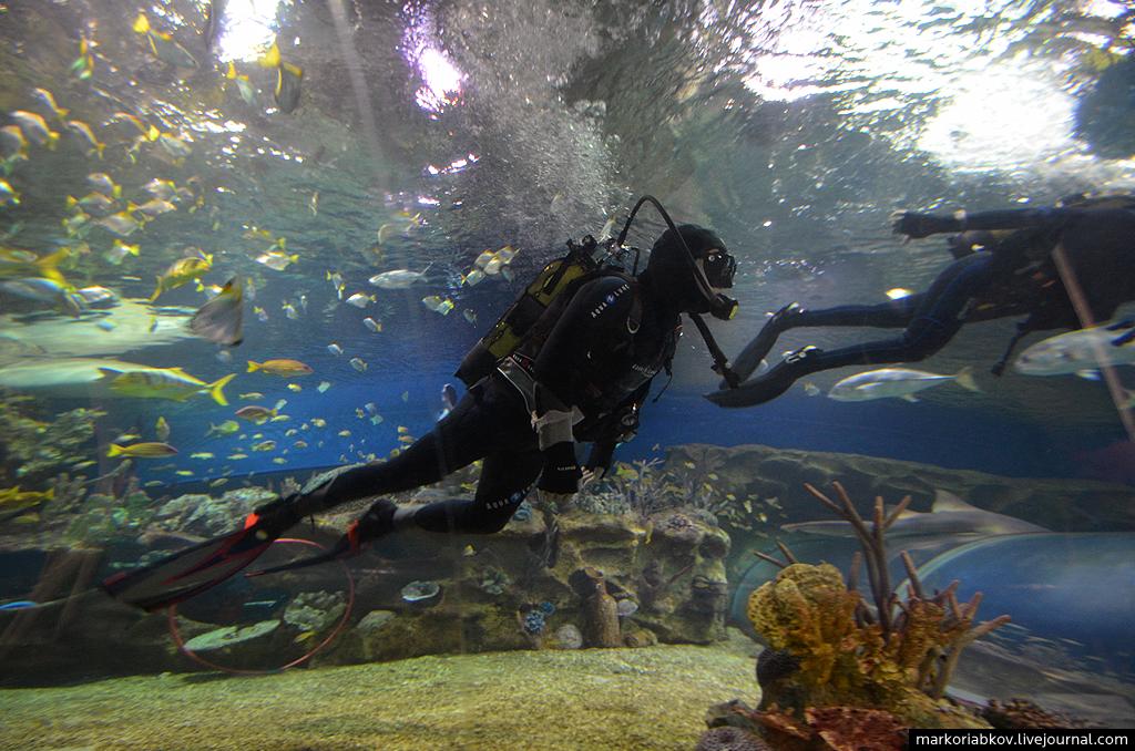 Океанариум | ТРК Планета Нептун | СПб