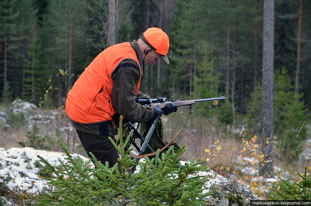 Ohota v Finlandii 11
