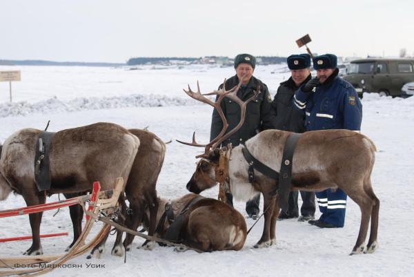 фото Маркосян Усик ДПС-ники пасутся за оленями