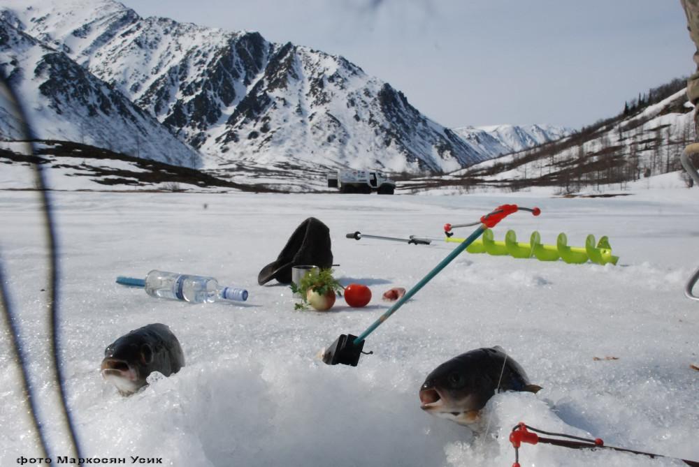 Хариус на льду Маркосян Усик