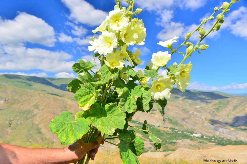 Маркосян Усик Горные цветы Армении....