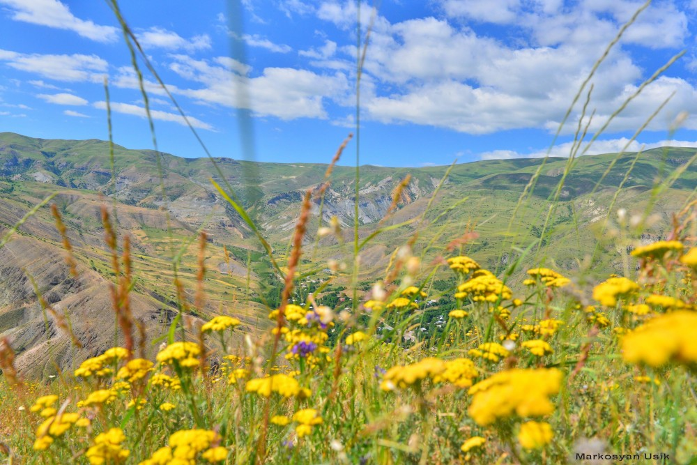 Маркосян Усик Горные цветы Армении..1