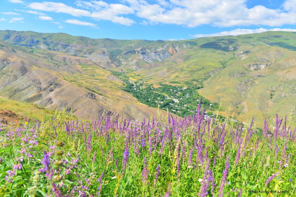 Маркосян Усик Горные цветы Армении.-