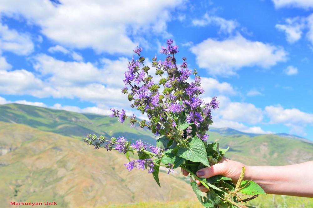 Маркосян Усик Горные цветы Армении.--