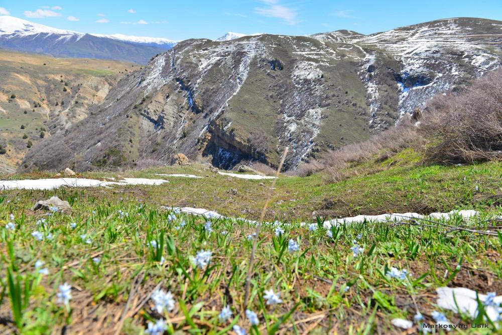 Маркосян Усик Горные цветы Армении.-0