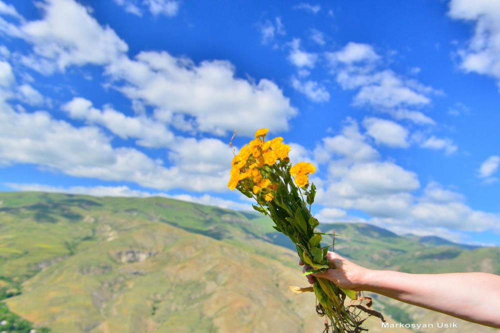Маркосян Усик Горные цветы Армении.1
