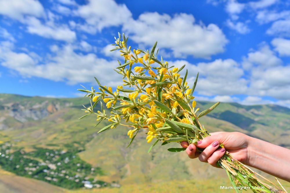Маркосян Усик Горные цветы Армении.11