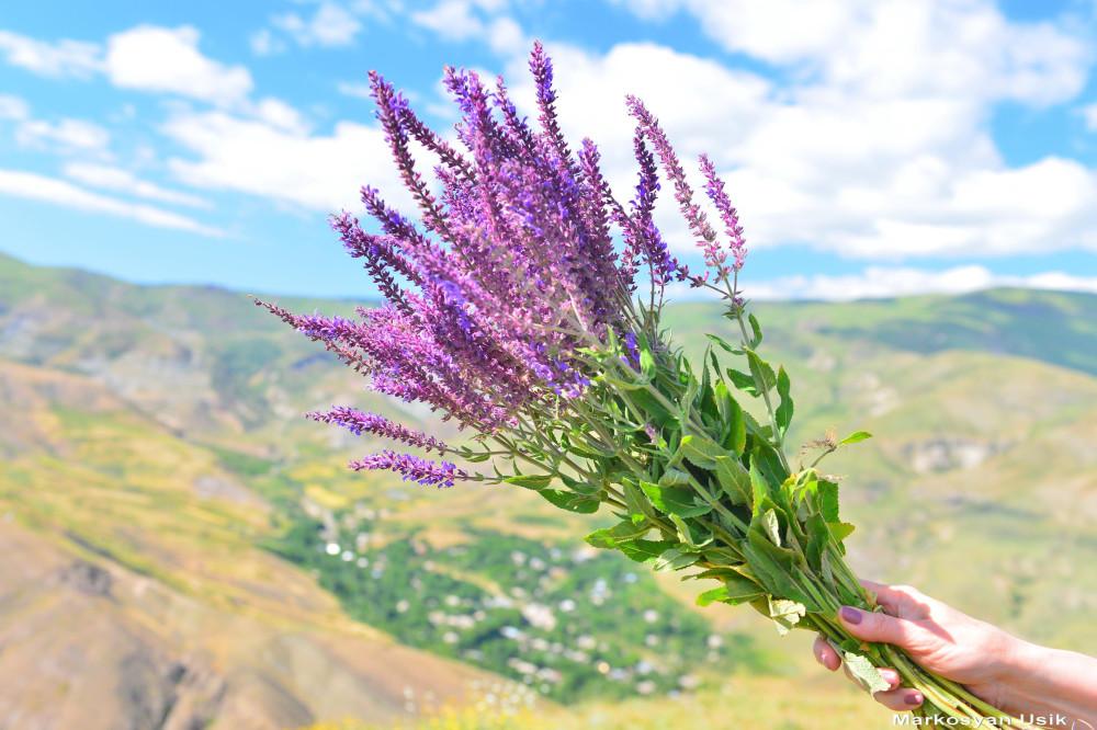 Маркосян Усик Горные цветы Армении