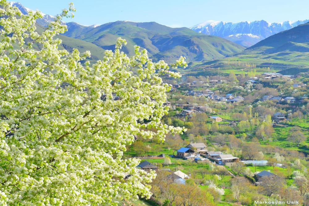 Маркосян Усик. Горные цветы Армении.