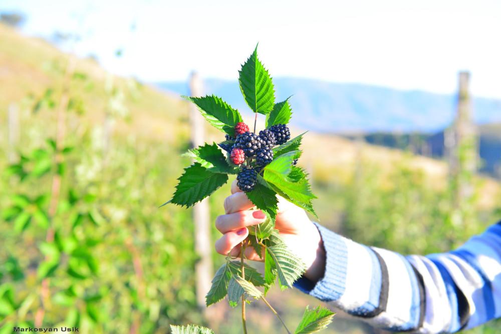 Маркосян Усик Горные цветы Армении,