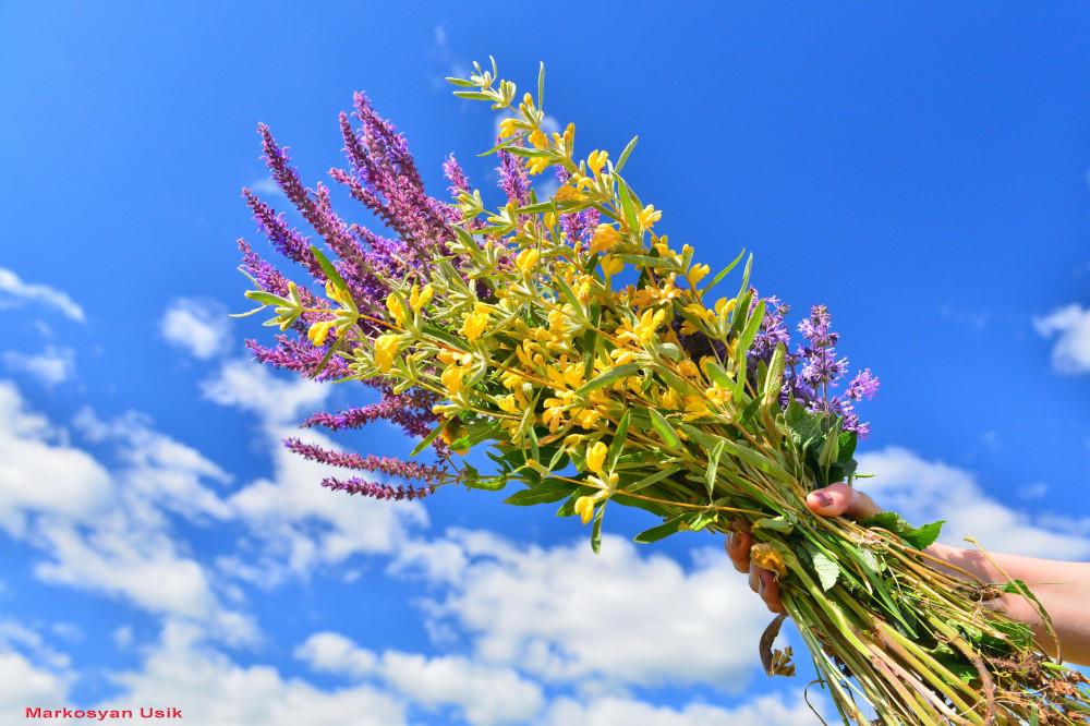 Цветы армении картинки