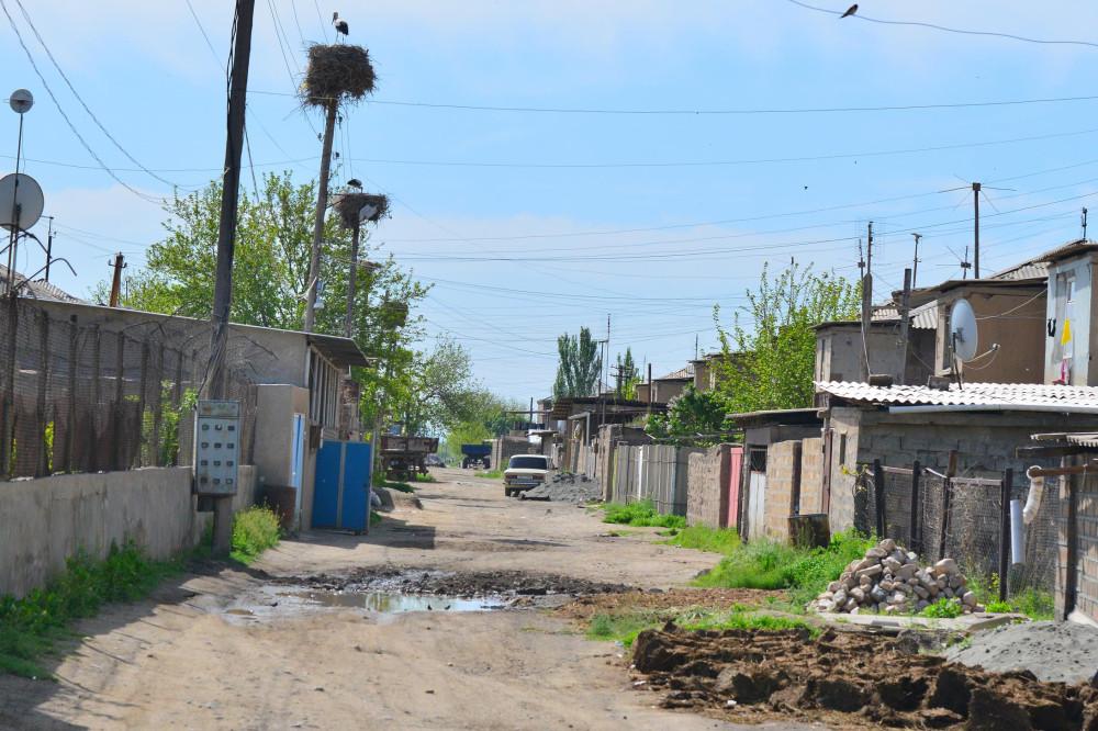 Аисты в Армении. Маркосян Усик .-=