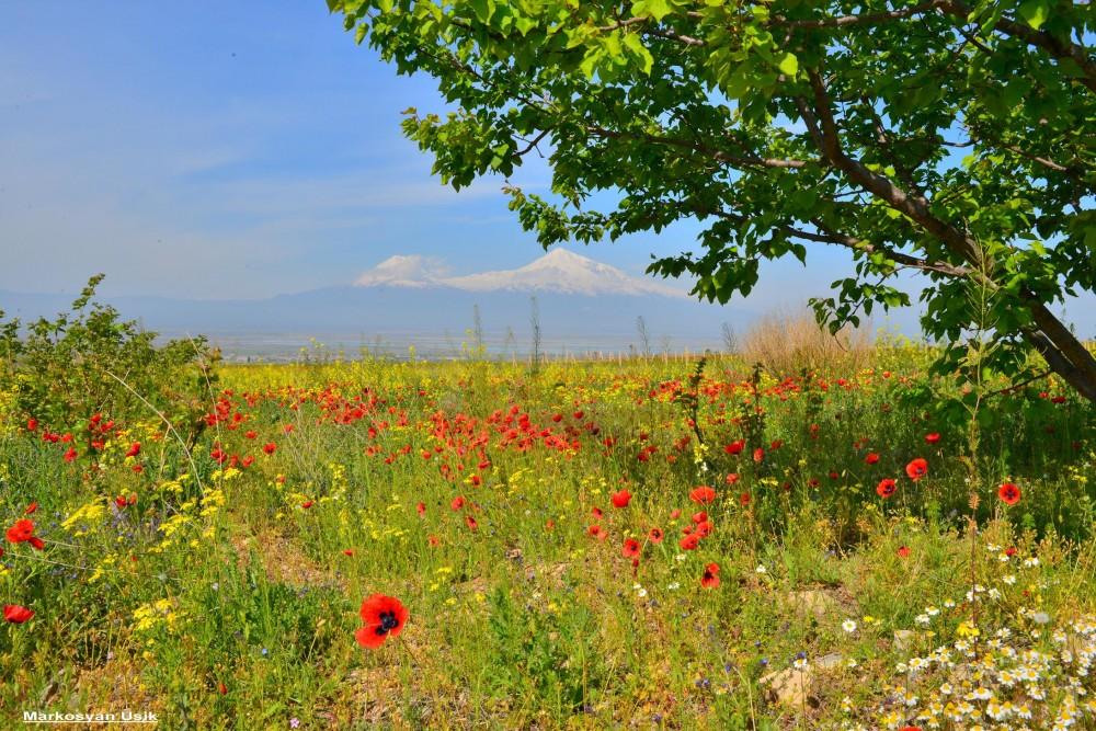 Аисты в Армении. Маркосян Усик 1