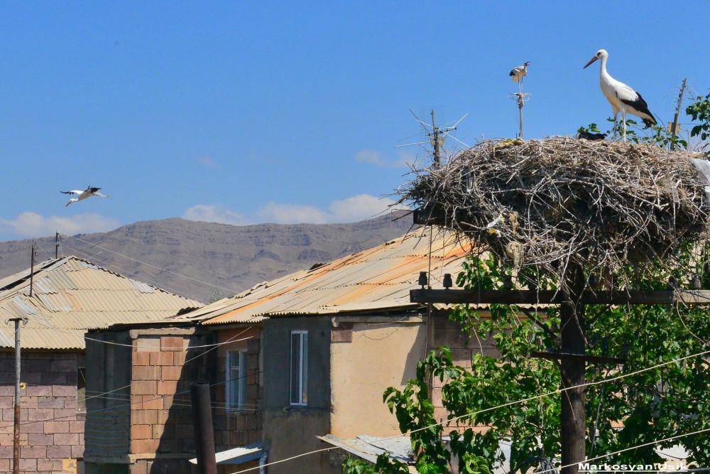 Аисты в Армении. Маркосян Усик .....