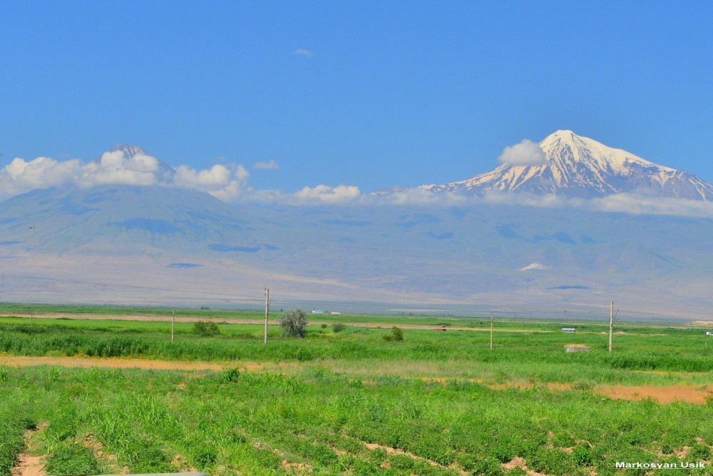 Аисты в Армении. Маркосян Усик ....-.