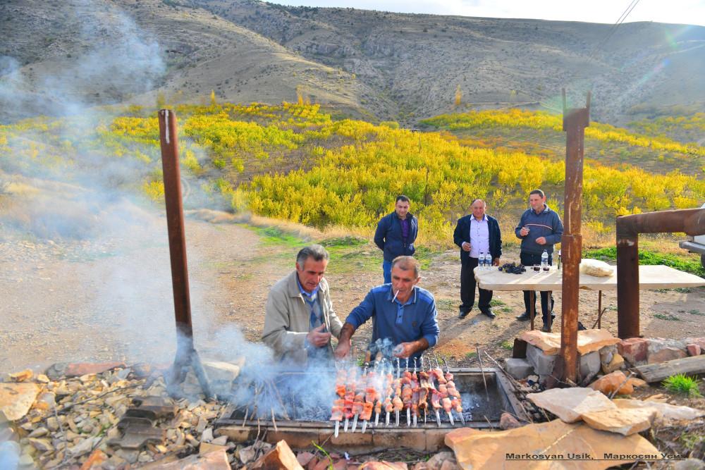 Абрикосы, абрикосовые сады Армении, Маркосян Усик .