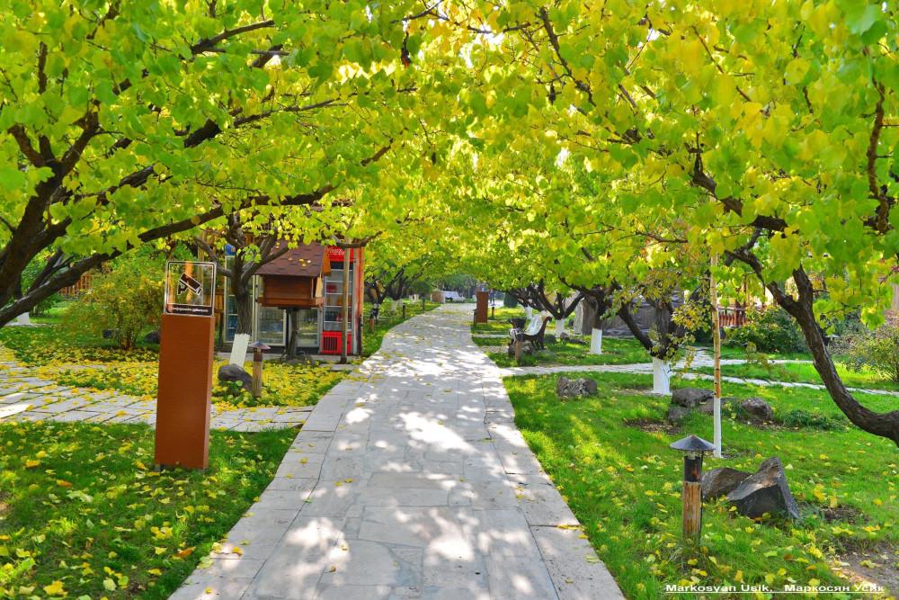 Абрикосы, абрикосовые сады Армении, Маркосян Усик----