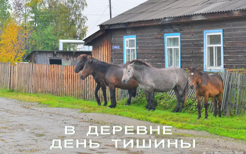 Маркосян Усик