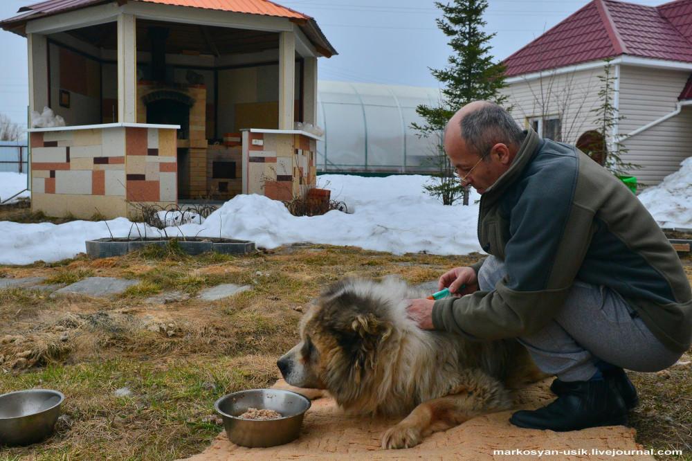 Собака Босс, фото Маркосян Усик --