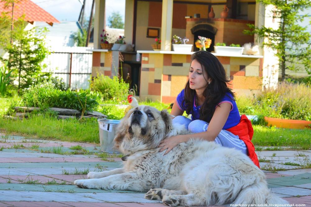 Собака Босс, фото Маркосян Усик....