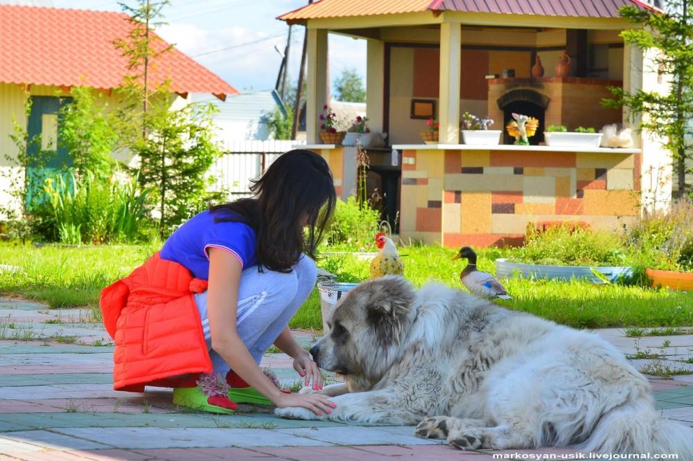 Собака Босс, фото Маркосян Усик..-