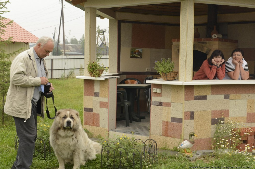 Собака Босс, фото Маркосян Усик